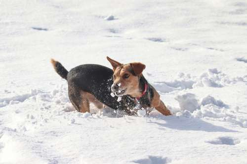 Dog Snow Race Play Agile Fun Winter Animal World