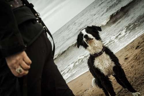 Dog Sea Beach Water Sand Pet Animal Ocean Run