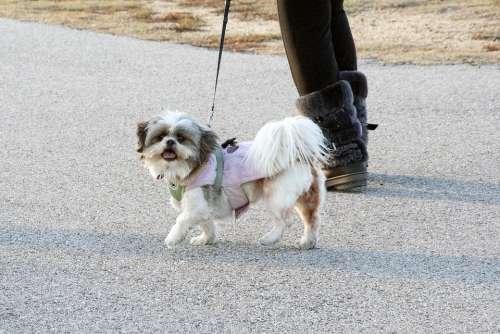 Dog Animal Pet Canine Doggy Breed Pedigree