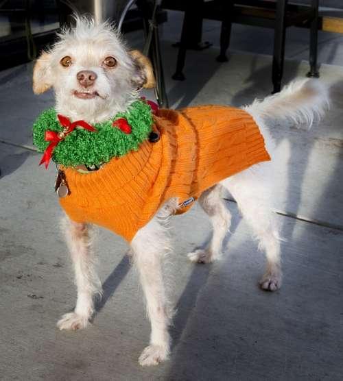 Dog Christmas Decoration Canine Pet Puppy Festive