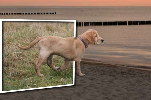 Dog Photomontage Mirror Fantasy Art Landscape