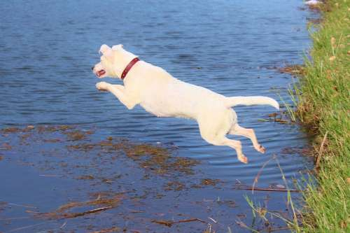 Dog Jump Water Joy Movement