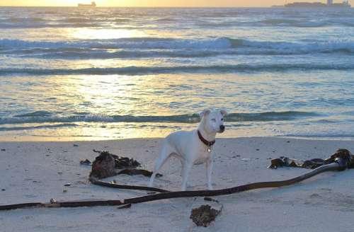 Dog Beach Play Batons Evening Sky Sunset Sea