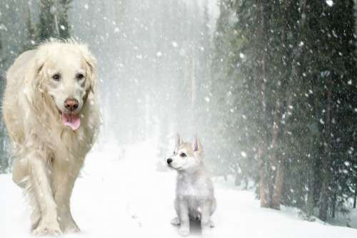 Dogs Puppy Snow Winter Forest Cute Young Friend