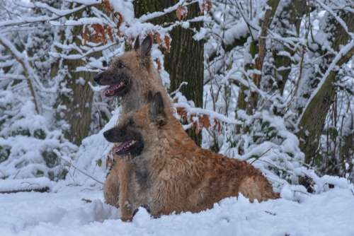 Dogs Snow Animal Winter Dog Pet Cold Nature