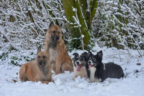 Dogs Snow Winter Cold