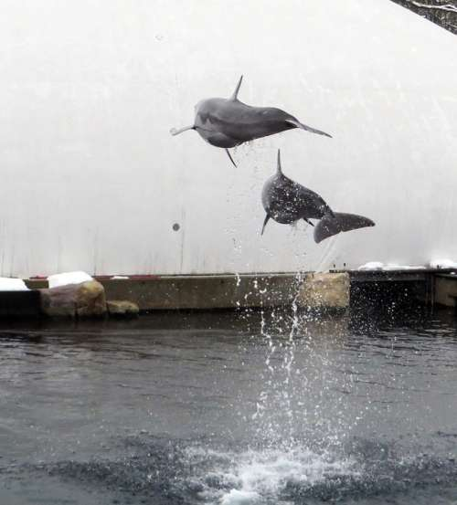Dolphin Sea Marine Mammals Jump