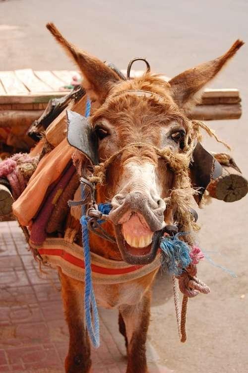 Donkey Marrakesh Morocco