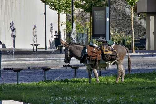 Donkey Animal Mule Beast Of Burden Grey