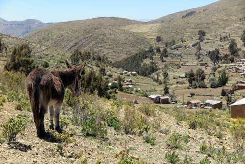 Donkey Chisi Landscape Agriculture Bolivia Rural