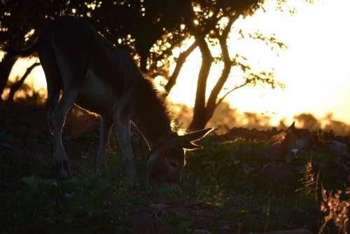 Donkey Sunset Farm Field Christmas Summer