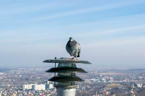 Dove Bird Lantern City View Sky Landscape