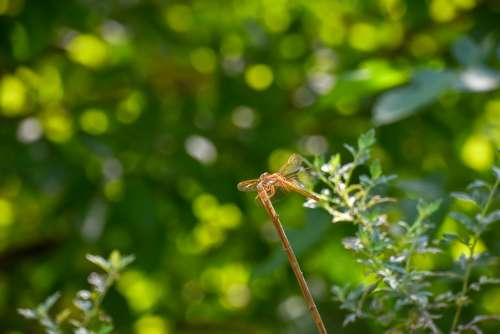Dragonfly Halo Stop In The Branches Green Leaf