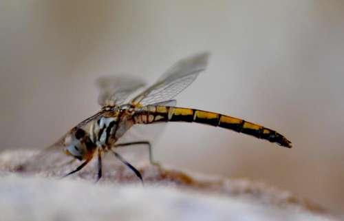 Dragonfly Close-Up Close Micro