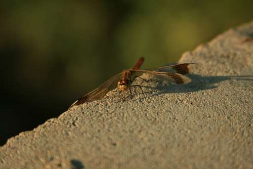 Dragonfly Nature Insects Concrete