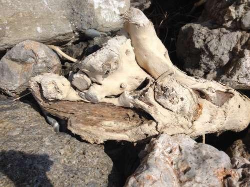Drift Wood Driftwood Flotsam Wood Beach