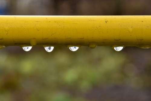 Drops Rain Trumpet Yellow Summer Drop Liquid