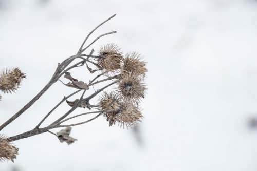 Dry Plant Winter Nature Plant Dry Flower Close Up