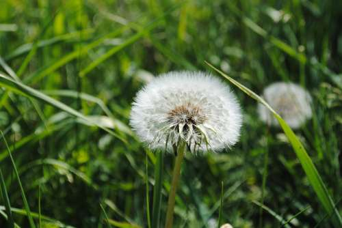 Dust Flower Daisies Grass