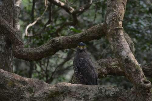 Eagle Wildlife Outdoor Nature Bird