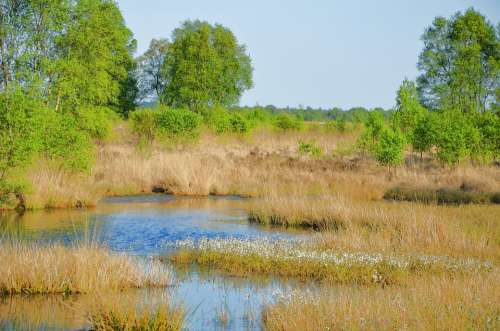 East Frisia Moor Lower Saxony Eternal Sea Reed