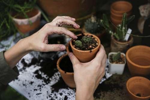 Ecology Environment Garden Gardening Green Hobby