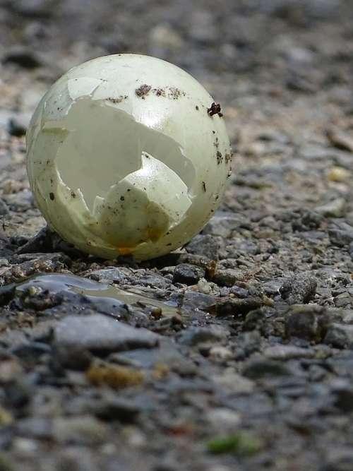 Egg Bird Abandoned Broken
