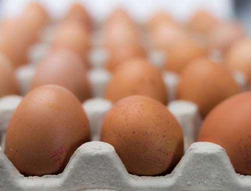 Eggs Package Multiple Food Carton