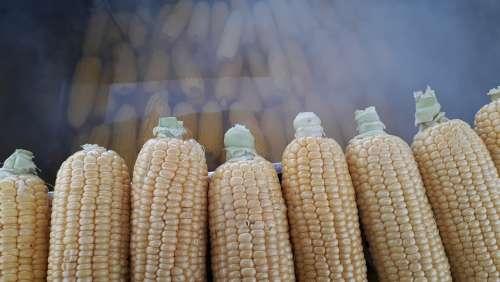 Egypt Food Grain Barley Harvest Arable Corner