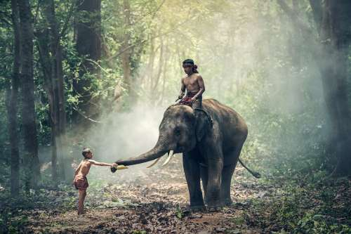 Elephant Riding Children Asia Cambodia Cultural