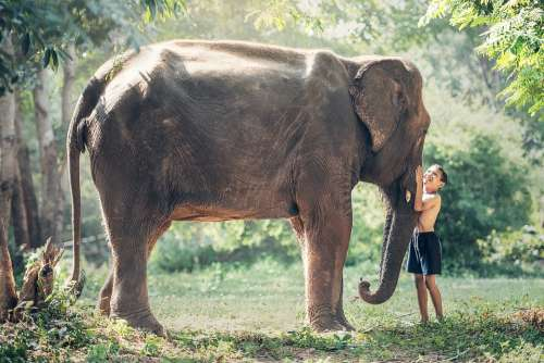 Elephant Cambodia Kid Child Animals Asia