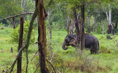 Elephant Elephants Animal Nature Animals Thailand