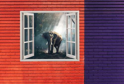 Elephant Animal Photography Big Zoo Strong Nature