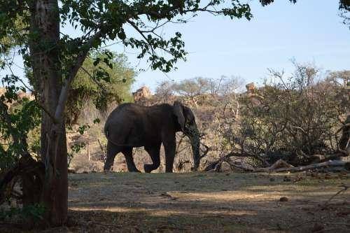 Elephant Mapungupwe Wild Africa Nature Mammal