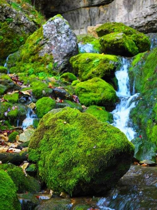 Elsach Bach Moss Nature Falkensteiner Cave