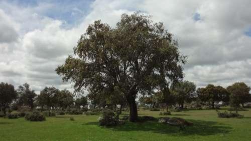 Encina Field Landscape