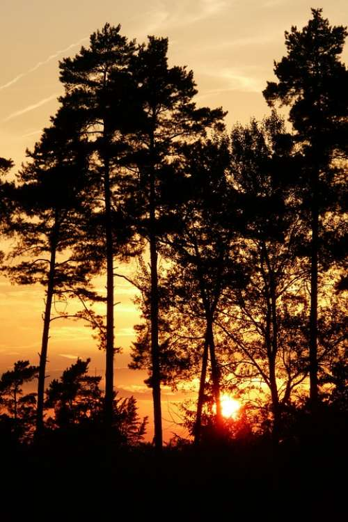 Evening Sky Forest Sunset Trees Afterglow