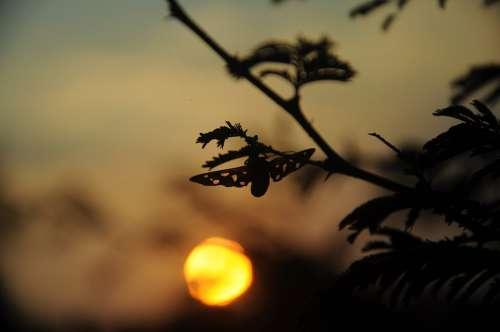 Evening Sky Sky Tree Sunset Mood Landscape Nature