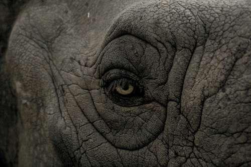 Eye Elephant Wild Animal Nature Wildlife Mammal