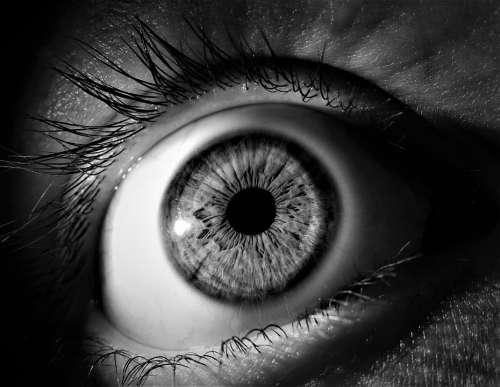Eye Iris Pupil Vision Eyeball Eyelashes View