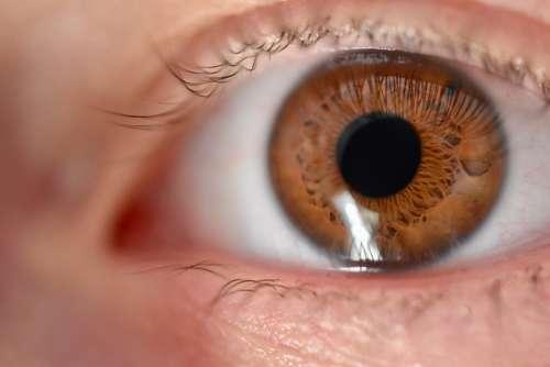 Eye Iris Eyelashes View Wards Close Up