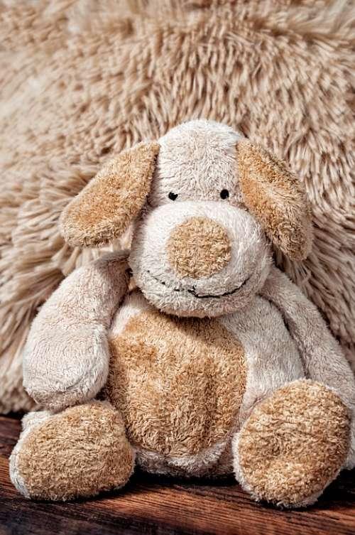 Fabric Dog Stuffed Animal Teddy Teddy Bear Cute