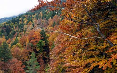 Fall Orange Green Forest Trees Fir Mountain Mist