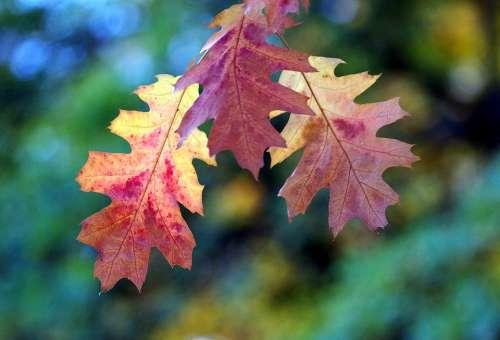 Fall Color Leaves Fall Leaves Autumn Tree Emerge