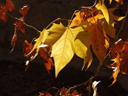 Fall Colors Warmth Touch Of Sun Autumn Expires