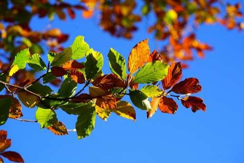 Fall Foliage Leaves Autumn Fall Leaves
