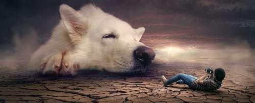 Fantasy Surreal Dream Dog Photomontage Mystical