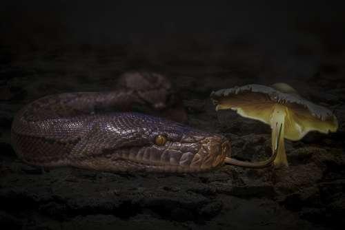 Fantasy Snake Reptile Mushroom Desert Nature