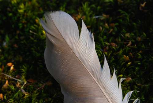 Feather Bird Sweden Nature