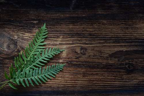 Fern Small Fern Green Plant Wood Brown